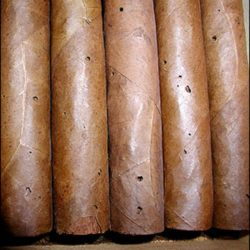 bicho sigari
